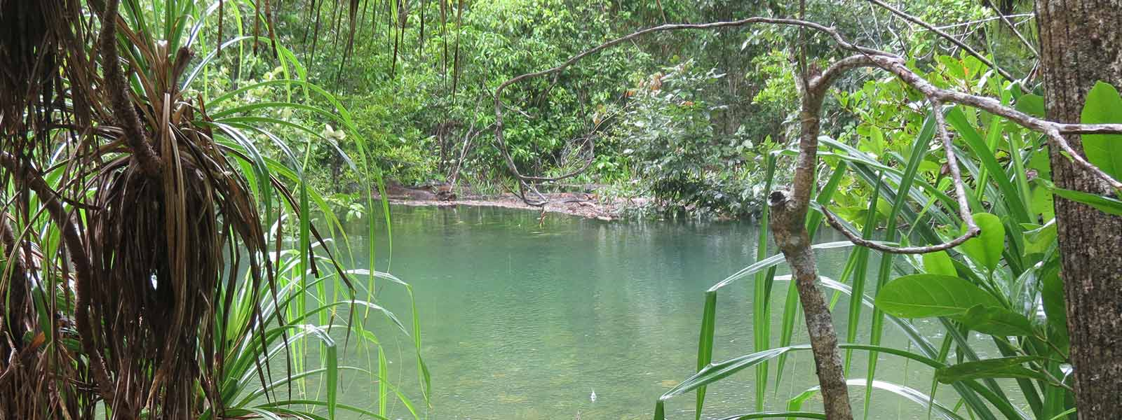 Explore the ancient Daintree Rainforest
